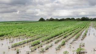 La Bolsa de Cereales estima pérdidas de 785 mil hectáreas de soja